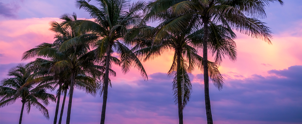 Miami Palms at Sunset  GettyImages-640206772